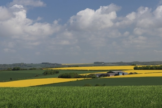 The openness of our countryside, Crichel, East Dorset