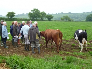 Neville Loder, a Dorset Council farm tenant, in white shirt telling CPRE members about individual cows from within his herd